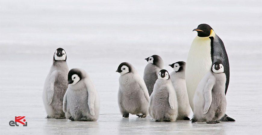 مجازات الگوریتم پنگوئن- ای نگاه